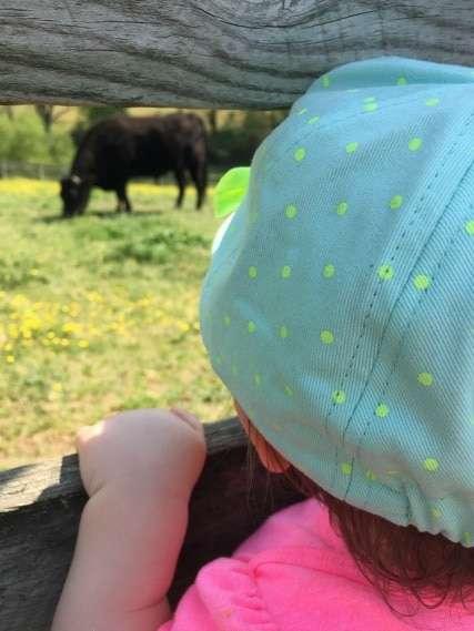 richmond toddler activities - maymont farm